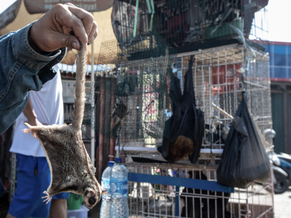 Corona: The pandemic & the pangolin