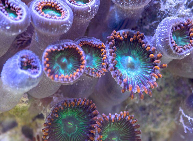 Al rescate de los arrecifes