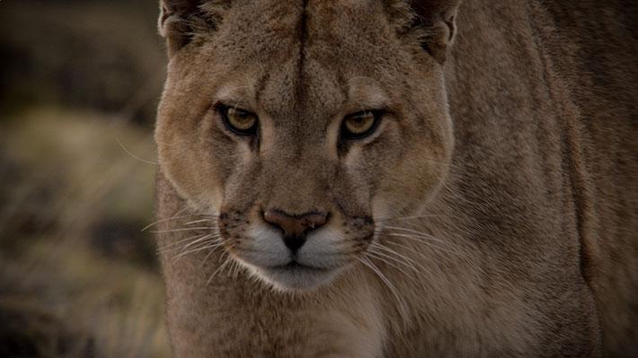 Primera versión del Festival de Cine Santiago Wild finalmente se realizará en septiembre con funciones online y gratuitas
