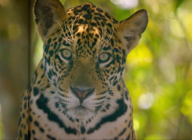 Tierra de Jaguares