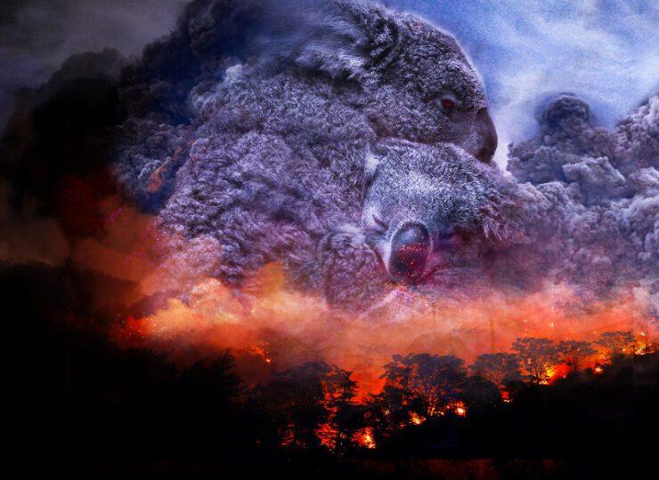 Australia salvaje: después del fuego.