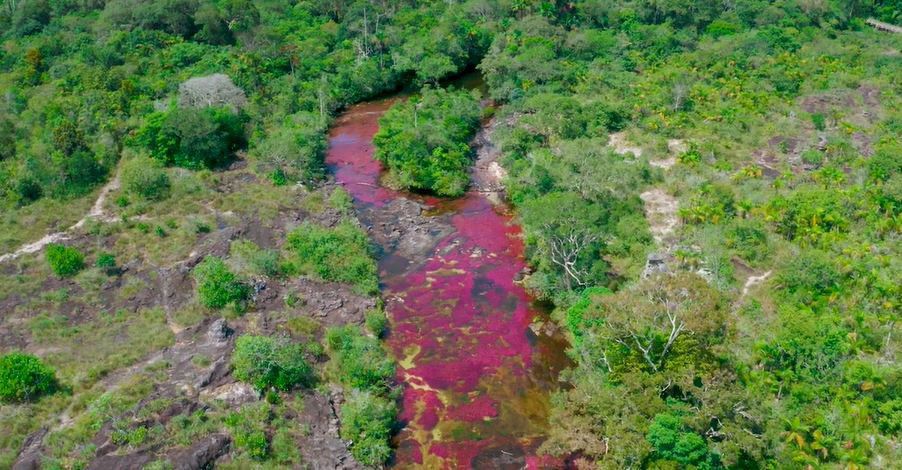 Caño Cristales: El Río Arco Iris (capítulo de la serie Saving Paradise)