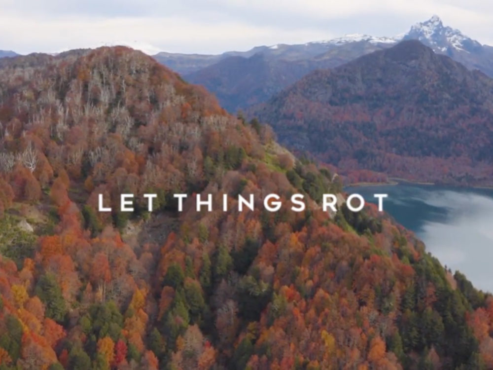 Let Things Rot
