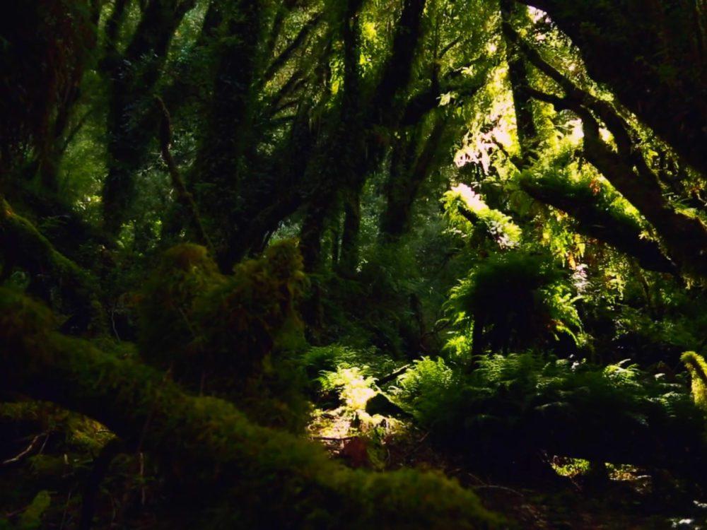 Lo que queda del Bosque