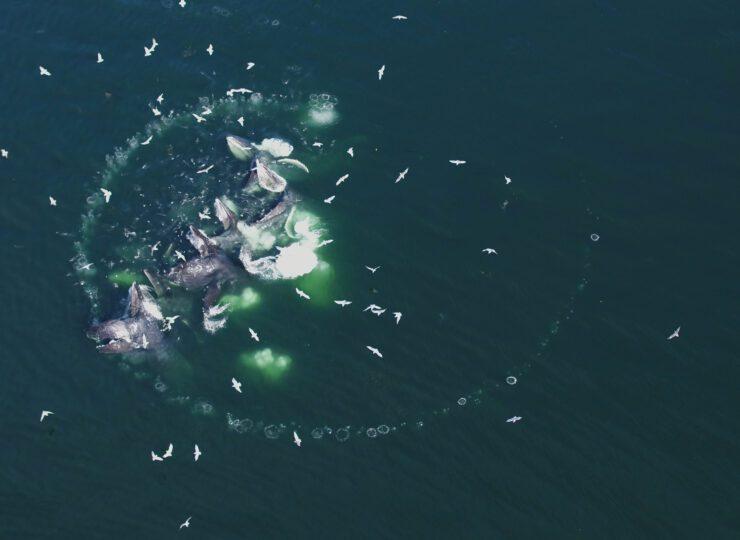 Súper depredadores del mar