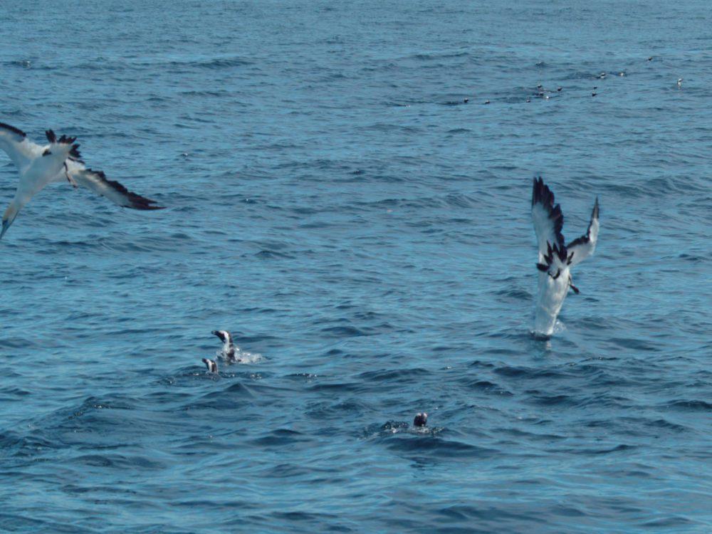Ocean Super Predators