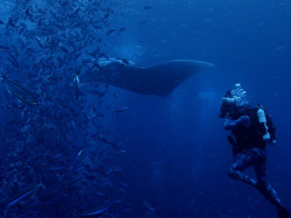 Pristrine Seas: the power of protection
